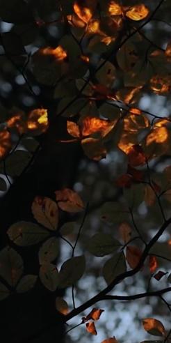 Bioluminescent Forest: exploring future technology through bioluminescence