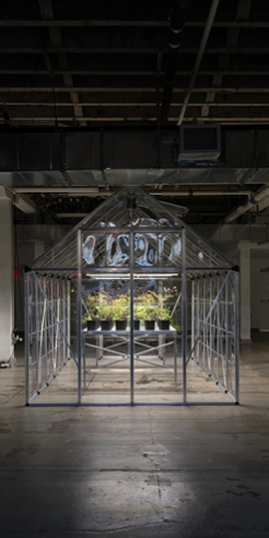 Michael Wang turns horticulture into art, reviving 46 plant species of NYC