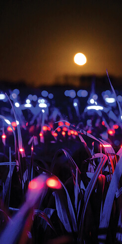 Daan Roosegaarde explores &ldquo;light recipes&rdquo; to <i>Grow</i> plants more sustainably