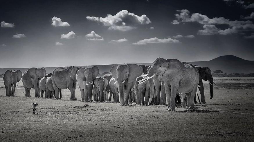 An epistle to Peter Beard: adventurer, wildlife defender, photographer, legend