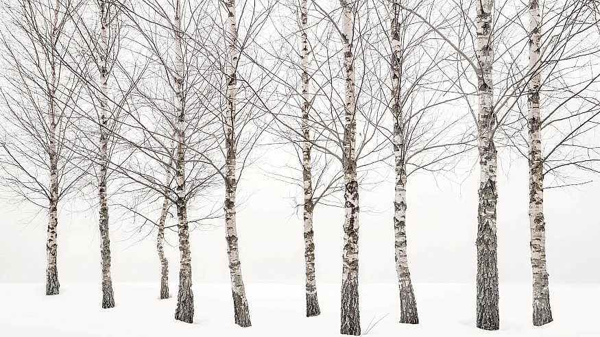 The aura of minimalism fills the works of the photographer Uwe Langmann