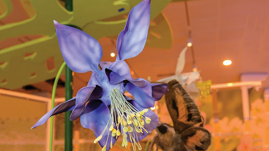 The American Museum of Natural History invites you to rediscover colour