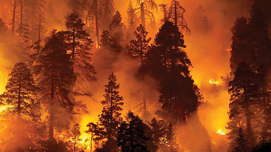 Digital Legacies: Climate Change