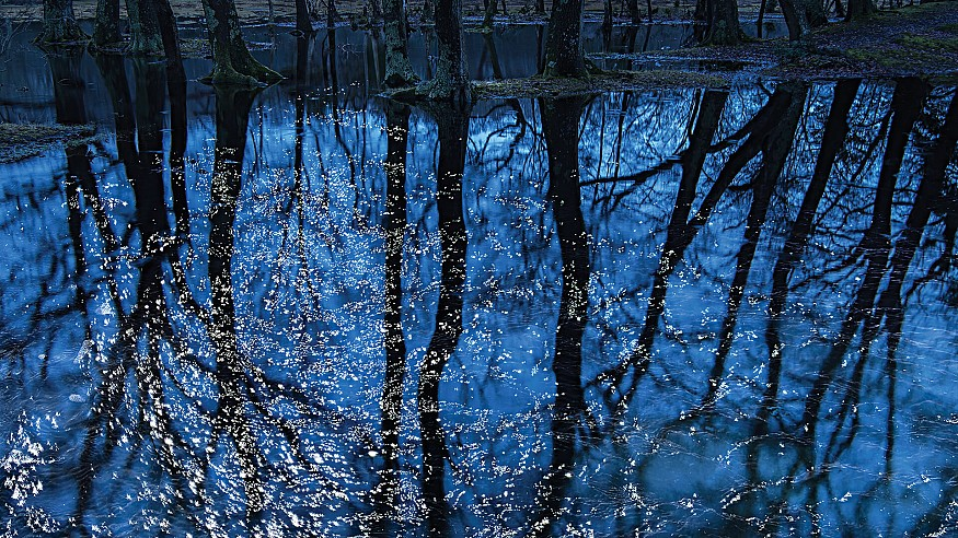 Ellie Davies' forest photography evokes the world of fulfilment and wonder