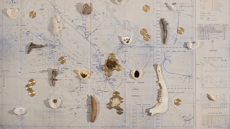 Apnavi Makanji's work traces faulty lines of modernity through botanical diversity