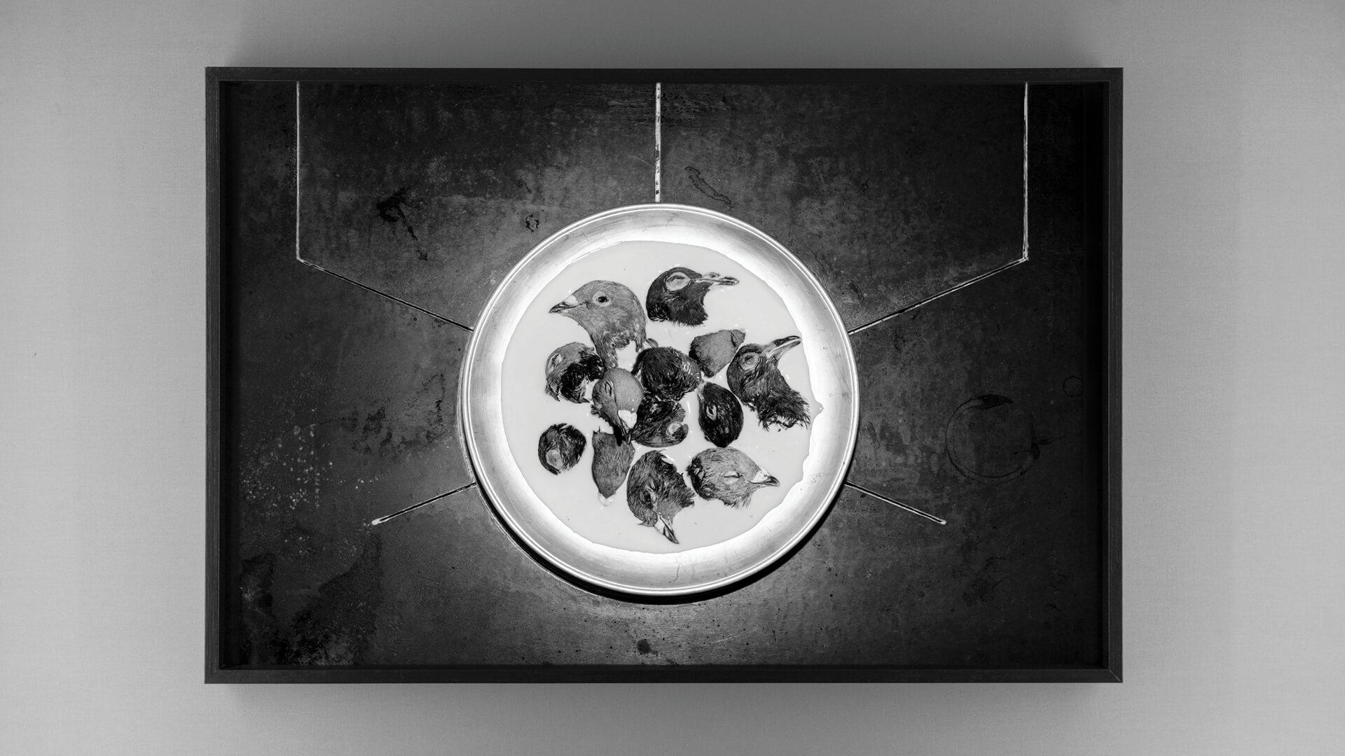 Photographer Elena Helfrecht discusses genetic memory and inherited trauma