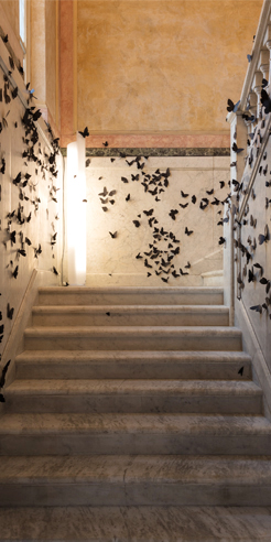15,000 butterflies take over Fondazione Adolfo Pini for Carlos Amorales' exhibition