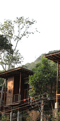 Wooden cabins at the Cardamom Club in Kerala float on a sea of green