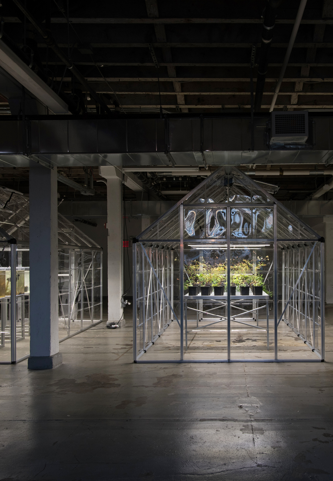 Michael Wang, Extinct in New York, Installation View 1, Lower Manhattan Cultural Council's Arts Center at Governors Island, New York, 2019 | Extinct in New York| Michael Wang| STIRworld