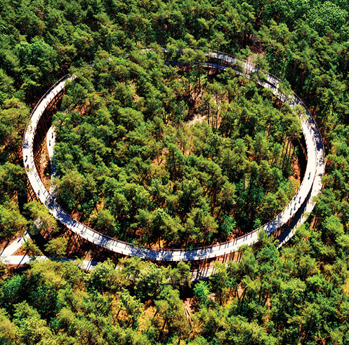 A circular cycling track offers unobstructed views of a Belgian forest
