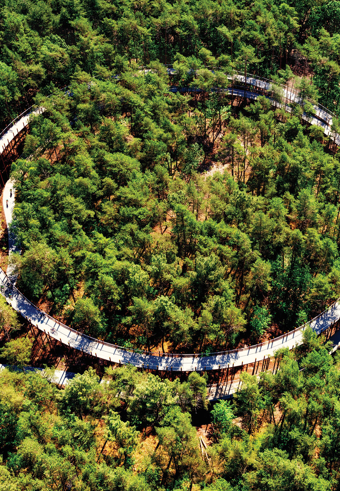 Cycling Through The Trees enables visitors to cycle amid a Belgian forest | Cycling Through The Trees | BuroLandschap and De Gregorio & Partners | STIRworld