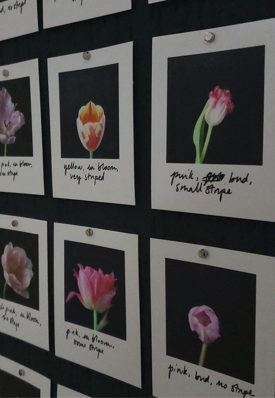 A glimpse of Myriad (Tulips) (2018) | Myriad | Anna Ridler | STIRworld