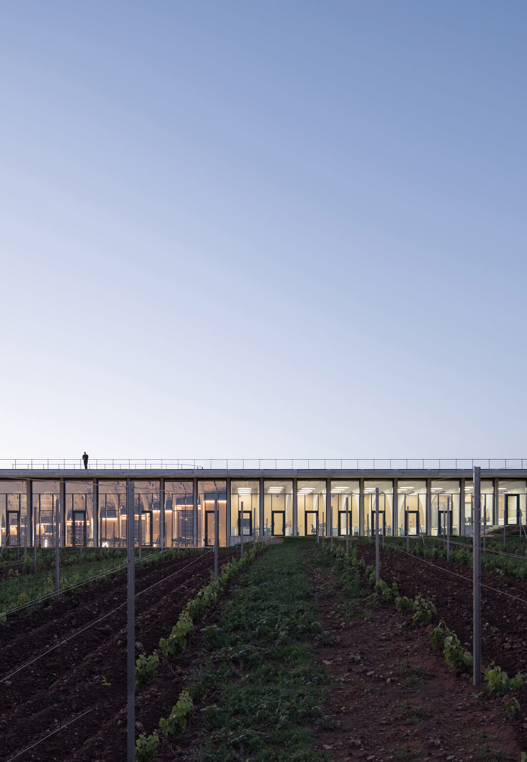 The varying heights of the production spaces mimic the vine-ladden terrain | Lahofer Winery by CHYBIK + KRISTOF | STIRworld