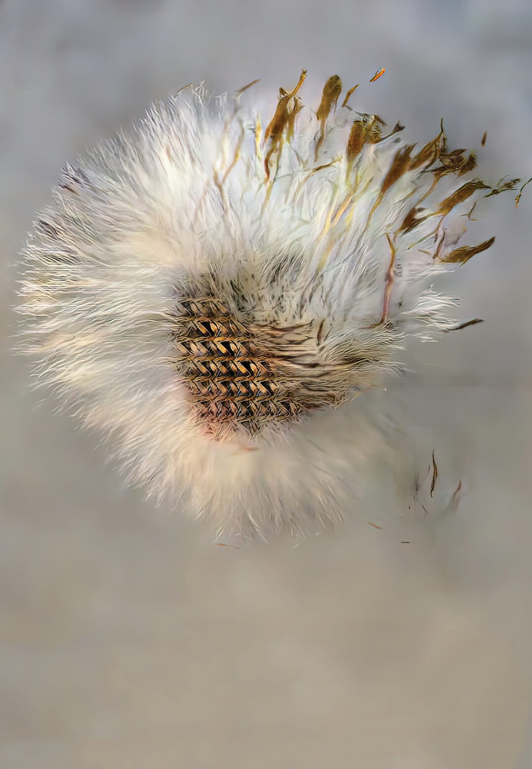 An image created through Young's machine-learning project, after he trained his program on images of dandelions | David Young | STIRworld