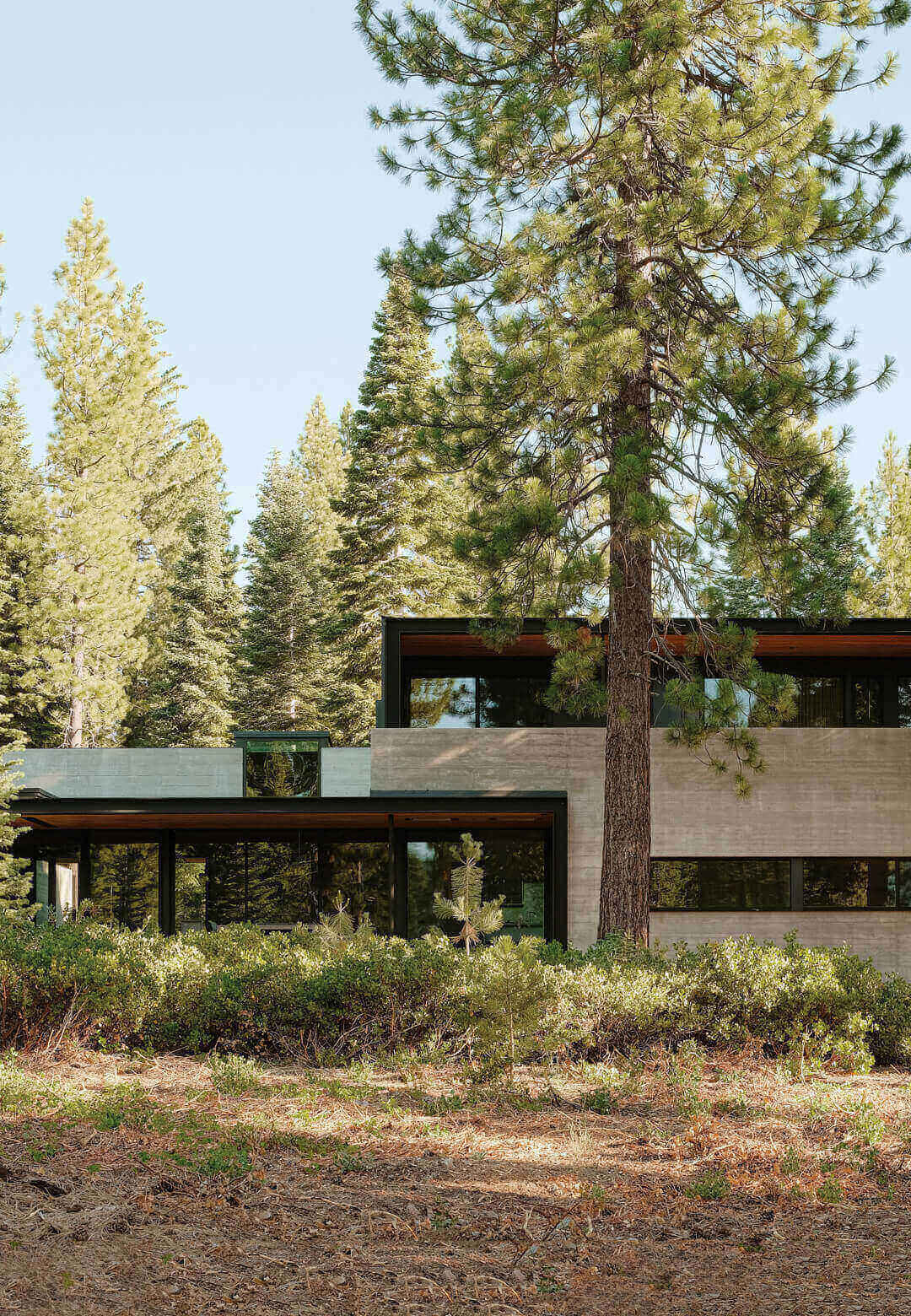 Forest House conceived by US based firm Faulkner Architects rests low amid a lush Californian woodland | Forest House by Faulkner Architects | STIRworld