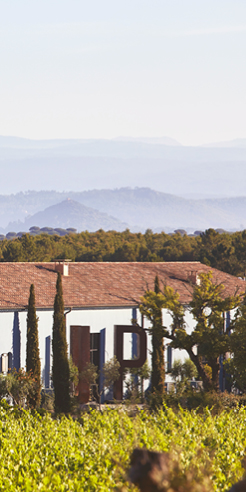 Ultimate Provence: In the south of France, an age-old vineyard transformed