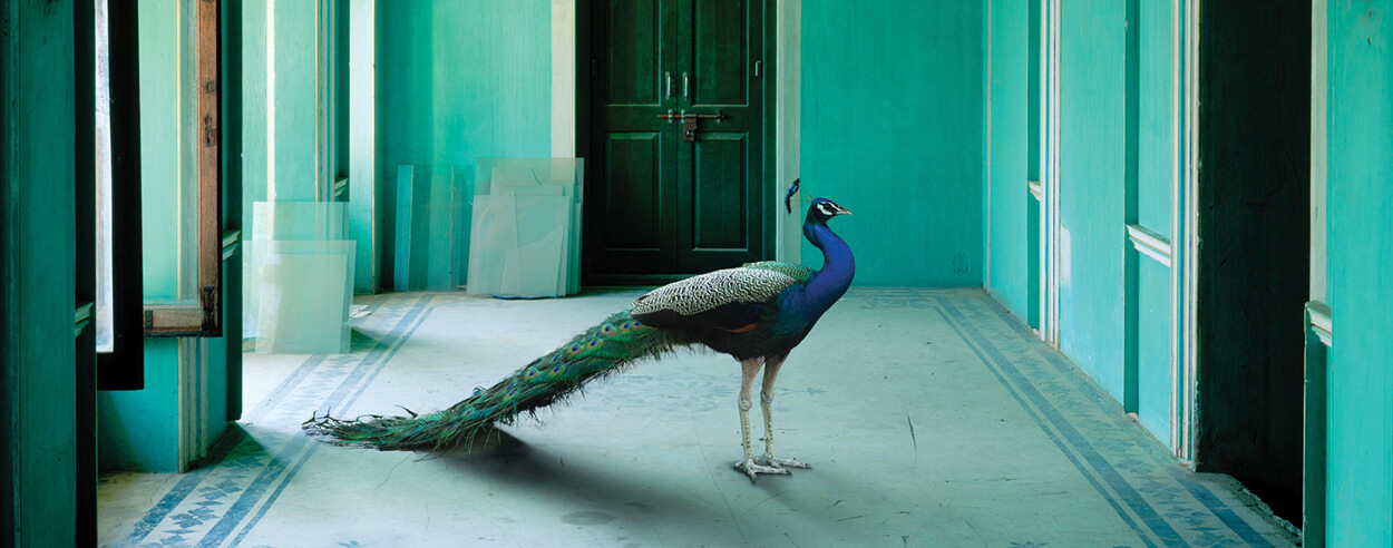 Karen Knorr explores migrating fables and animals in her photography