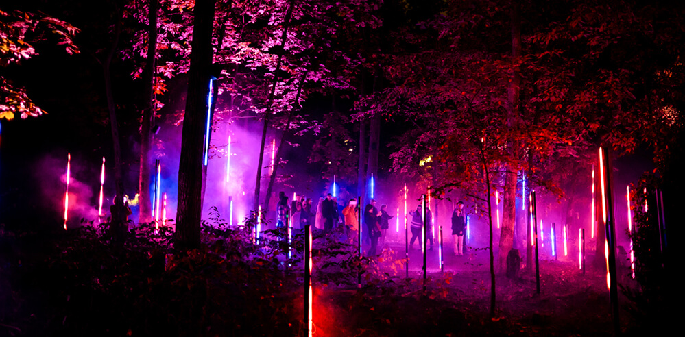 Moment Factory's 'North Forest Lights' in the US reconnect people to nature