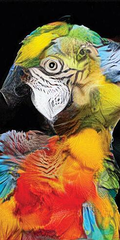 Morphing fauna with Berlin-based digital artist Sofia Crespo