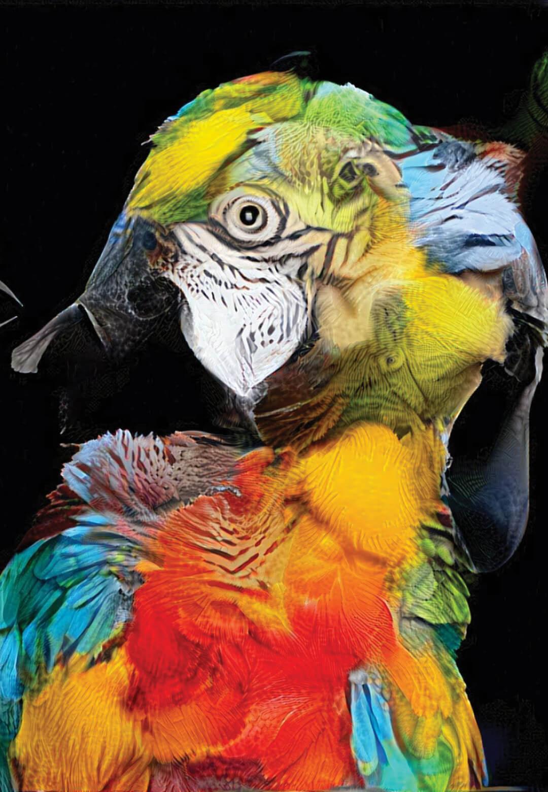 Realization, a blend of various avian forms | Sofia Crespo | STIRworld