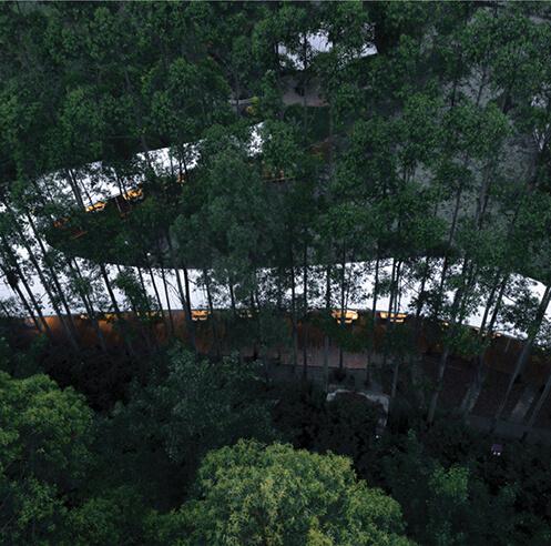 MUDA-Architects' Garden Hotpot Restaurant snakes through a eucalyptus forest in China
