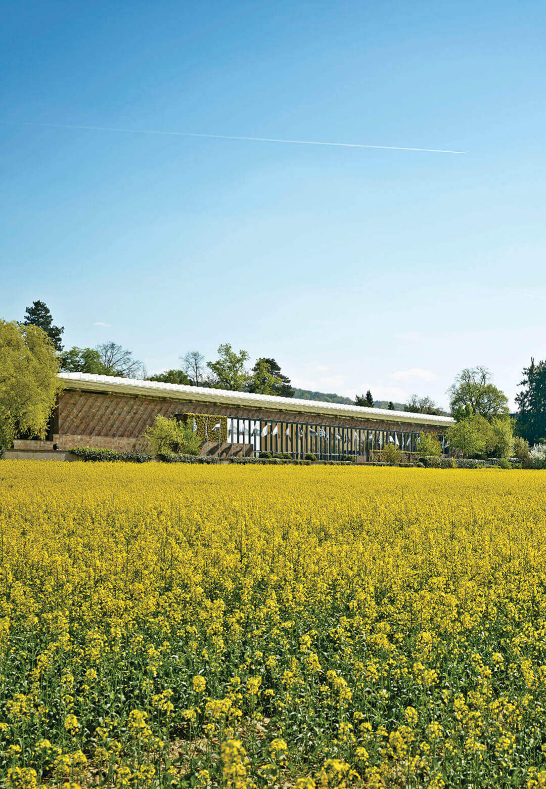 Architect Renzo Piano purposefully designed the museum building to be unobtrusive and blend with the surrounding natural landscape   Fondation Beyeler   Renzo Piano   STIRworld