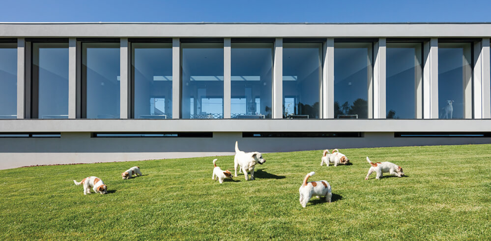 Raulino Silva designs a holiday retreat for cats and dogs in Portugal
