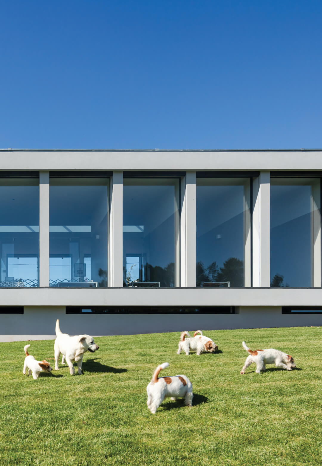 Canine and Feline Hotel by Raulino Silva in Parada, Portugal | STIRworld