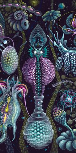 Robert Steven Connett and his biotic curiosities