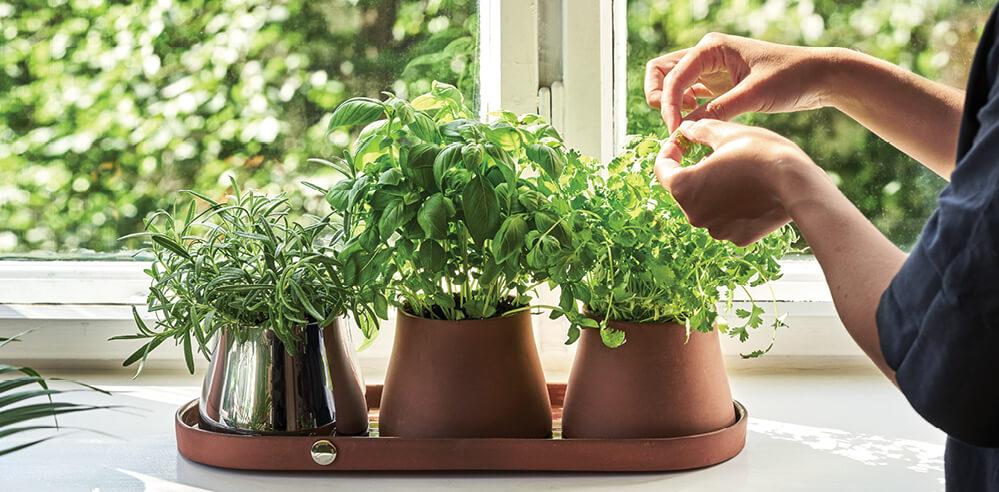 Snøhetta designs Terra, a nine-piece plant accessory series for Georg Jensen
