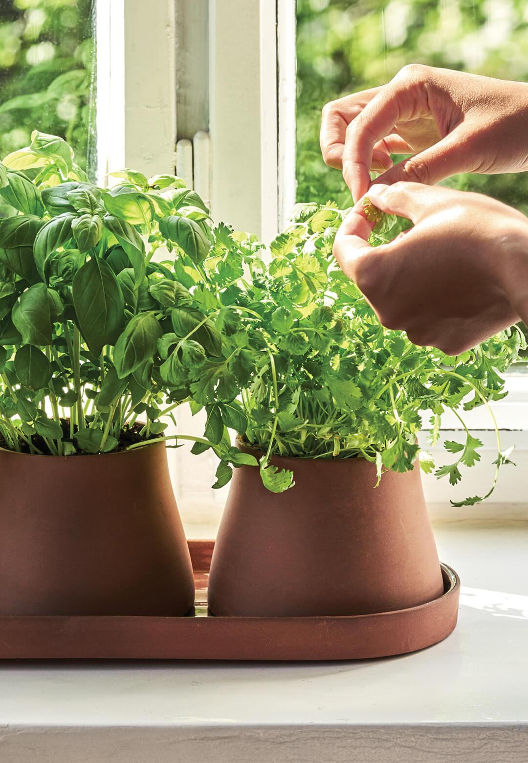 Terra, a nine-piece plant accessory collection designed by Snøhetta for Georg Jensen | Snøhetta designs Terra collection for Georg Jensen | STIRworld