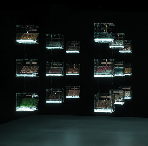 'The Transparency of Randomness' at Ars Electronica explores chance and probability