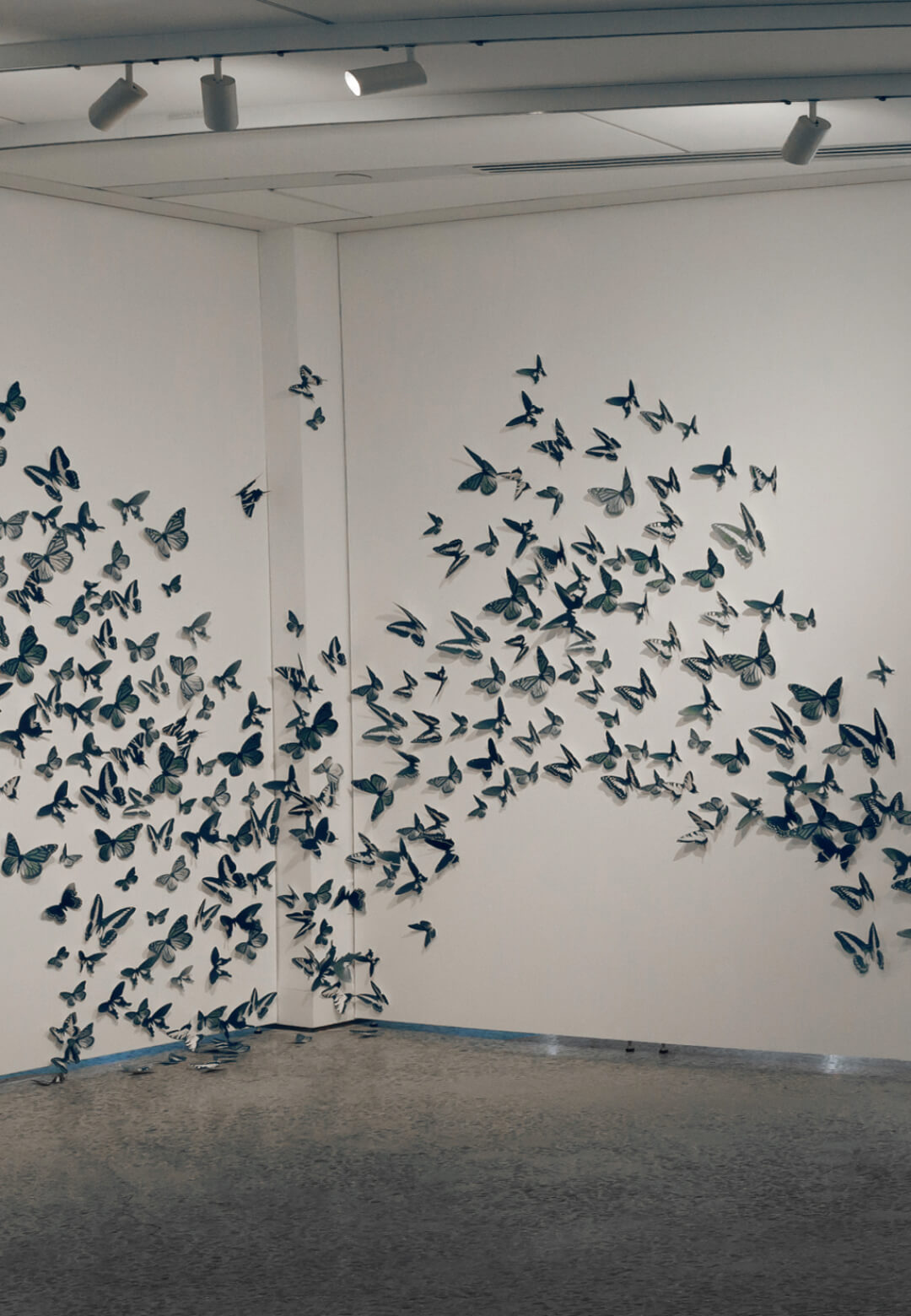 Murmuration and The Swarm | Leah Sobsey | STIRworld