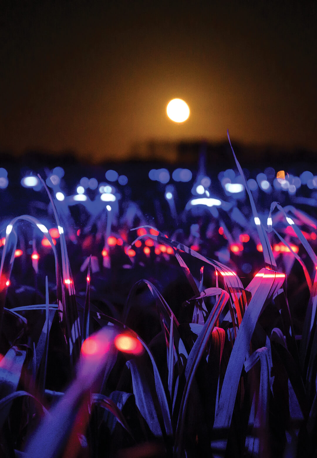 Grow is a 20,000 sqm light installation by Studio Roosegaarde that highlights the beauty and importance of agriculture | Grow by Daan Roosegaarde | STIRworld