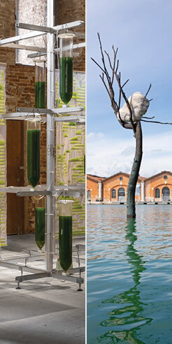 Five works at Venice Architecture Biennale 2021 led by ecologically sensible principles