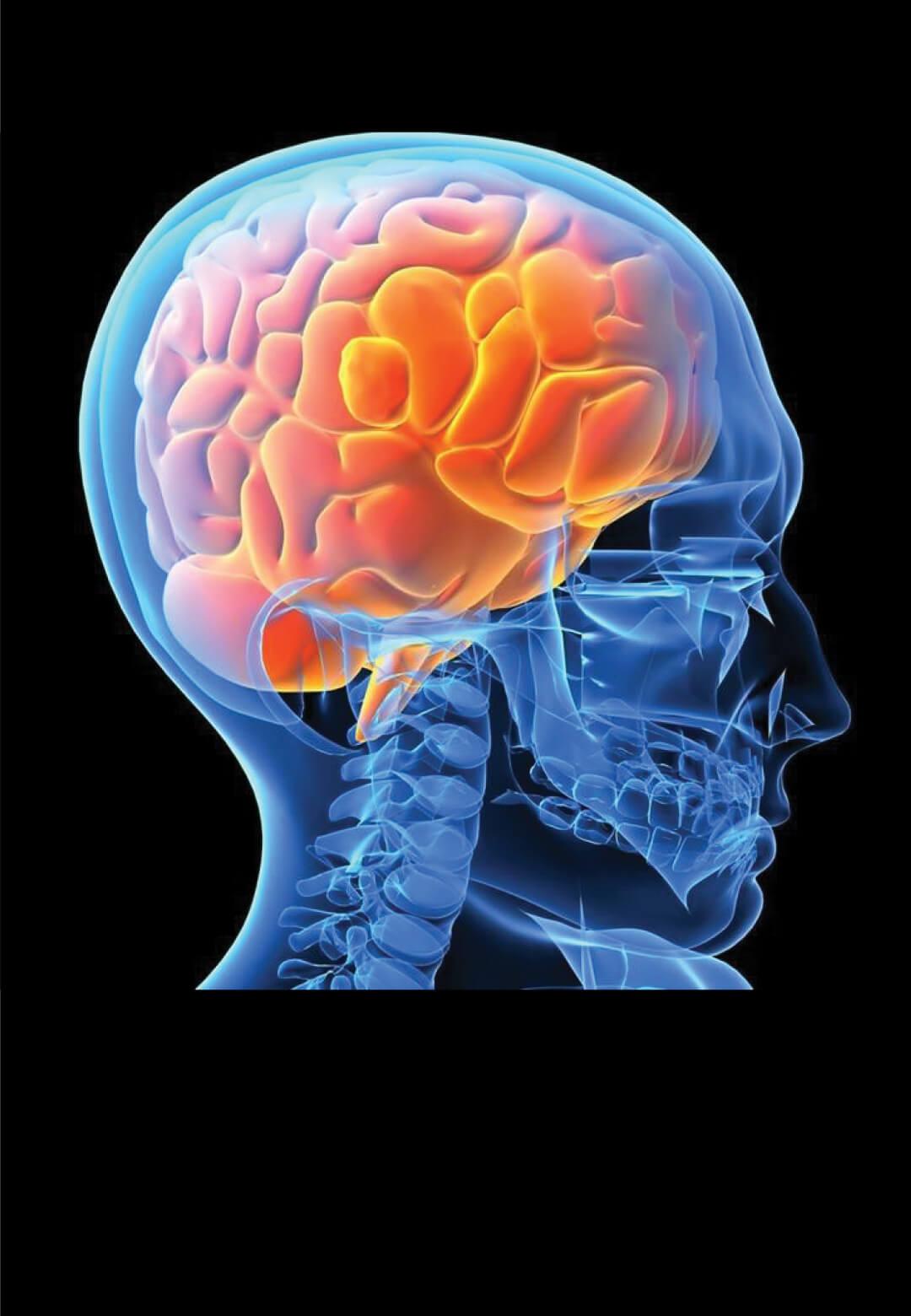 Image of a human brain   Digital Legacies: Self-determination   Julius Wiedemann   STIRworld