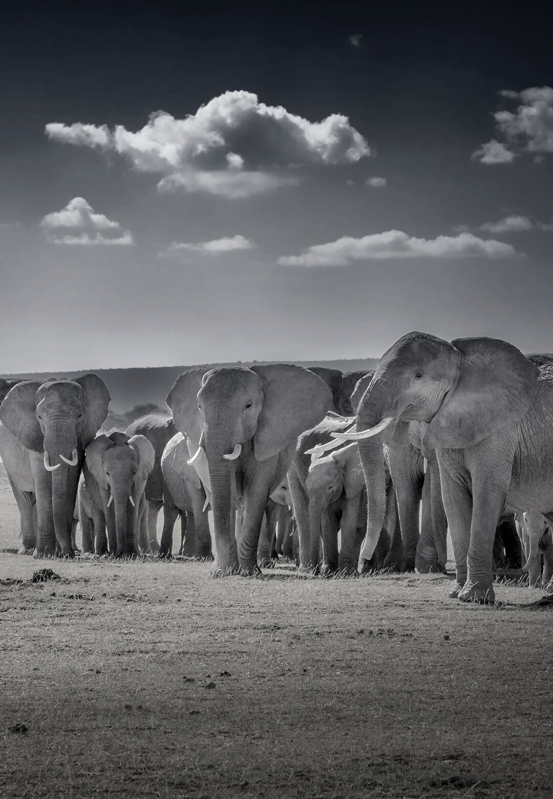 A herd of African Elephants | Peter Beard Tribute | Bittu Sahgal | STIRworld