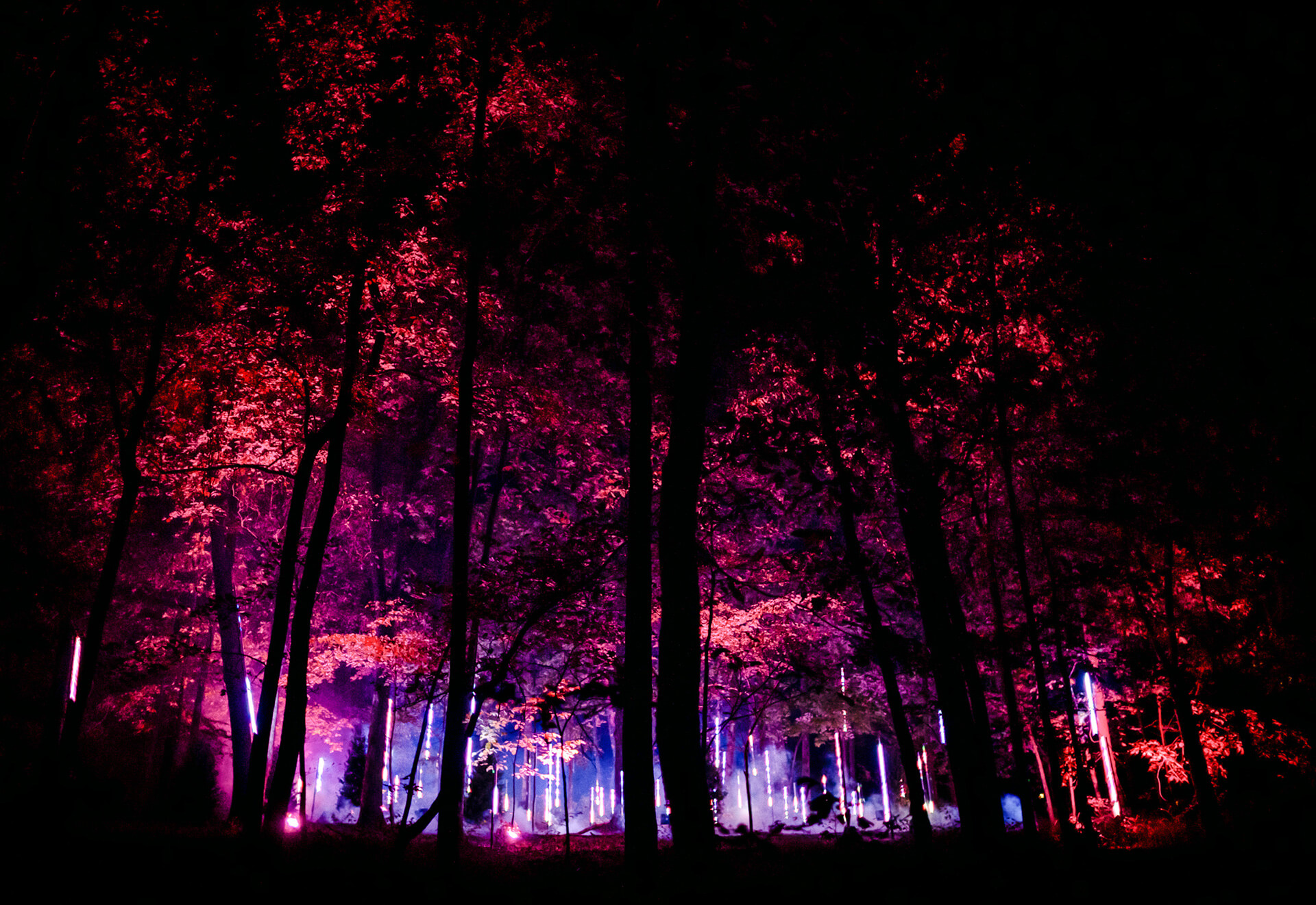 The five installations bring the soul of the forest to life with light, sound, and sensory effects | Moment Factory | STIRworld