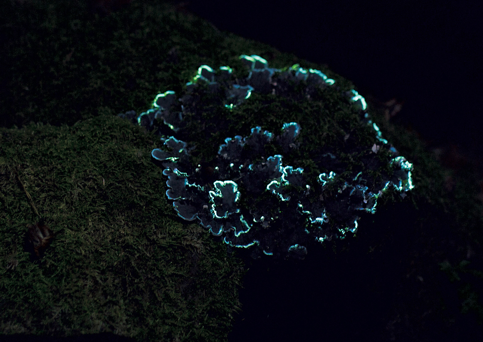 The surreal phenomena of bioluminescence as projected by artists Friedrich van Schoor and Tarek Mawad| Bioluminescent Forest| 3hund| STIR