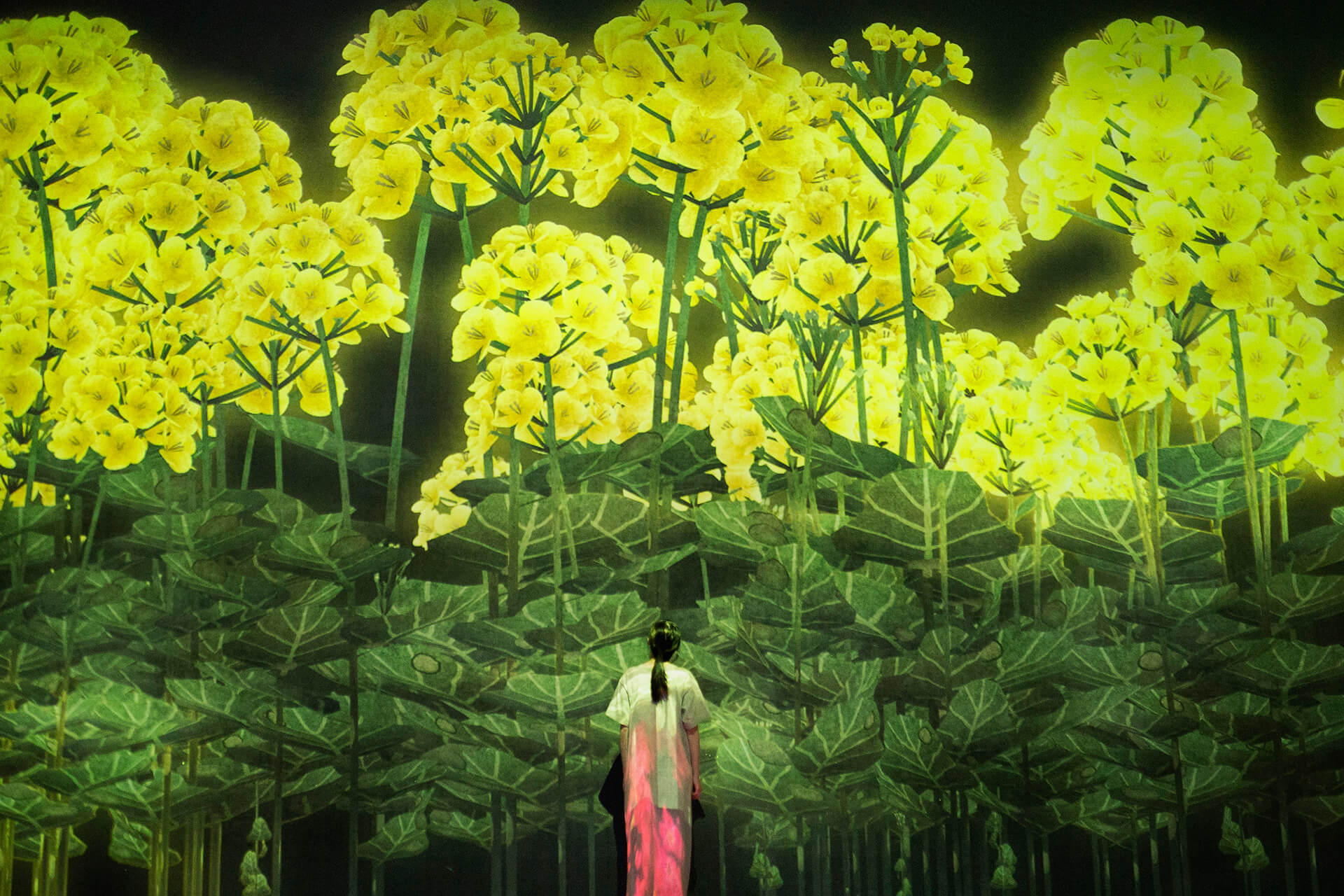 A generative art installation by teamLab titled 'Proliferating Immense Life - A Whole Year per Year' | Future World by teamLab | STIRworld