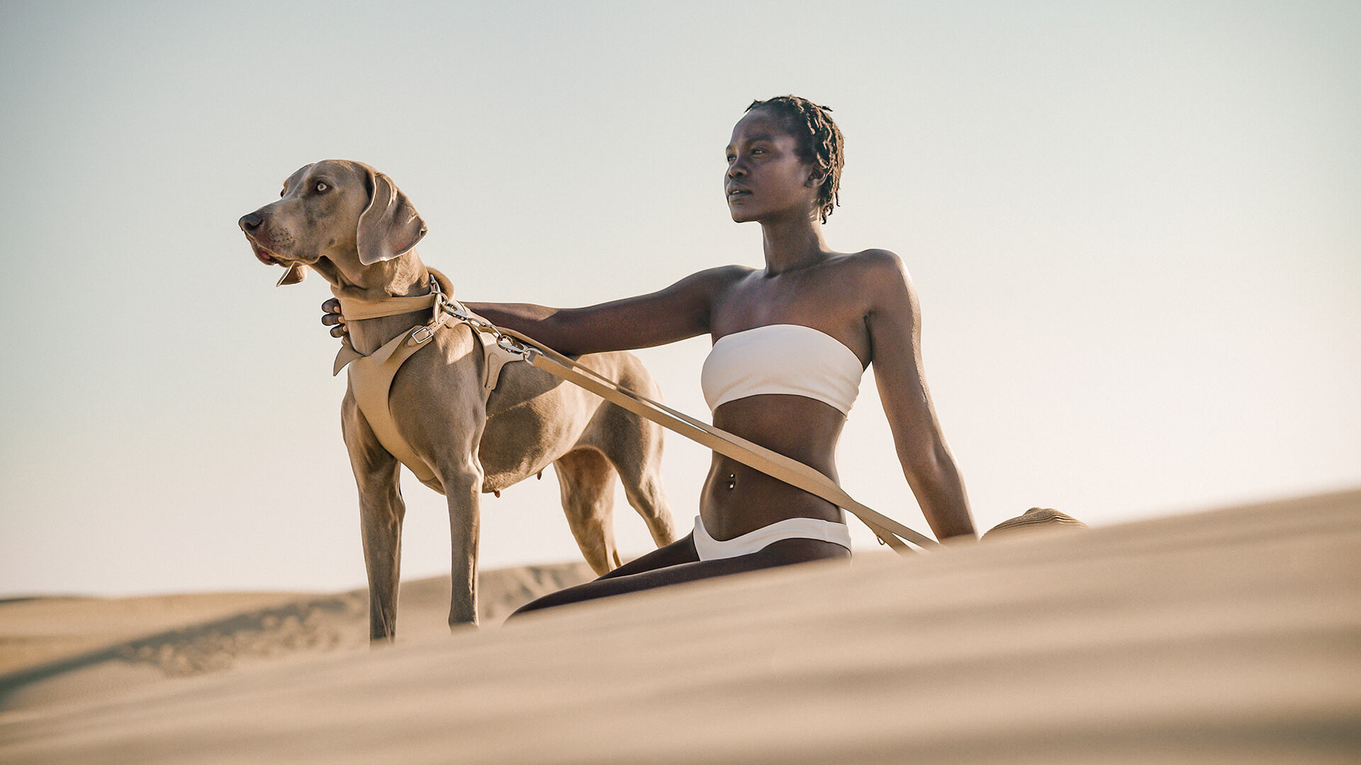 A dog sporting the Sahara collection | Pagerie | USA | STIRworld