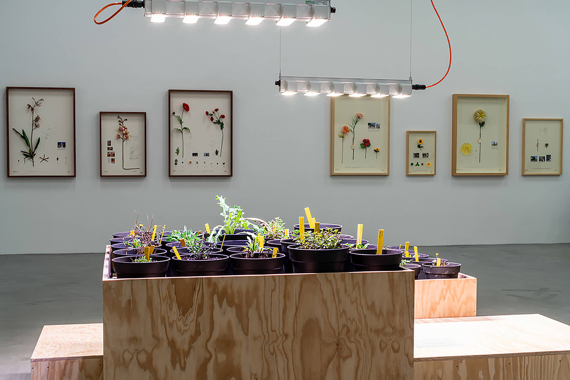 Maria Thereza Alves' Seeds of Change: New York – A Botany of Colonisation (2017) in front of Alberto Baraya's Berlin Expedition and Sicily Expedition, Herbario de Plantas Artificiales (Herbarium of Artificial Plants) (2014-2018) at Migros Museum für Gegenwartskunst| Potential Worlds 1: Planetary Memories | Maria Thereza Alves, Alberto Baraya | STIRworld
