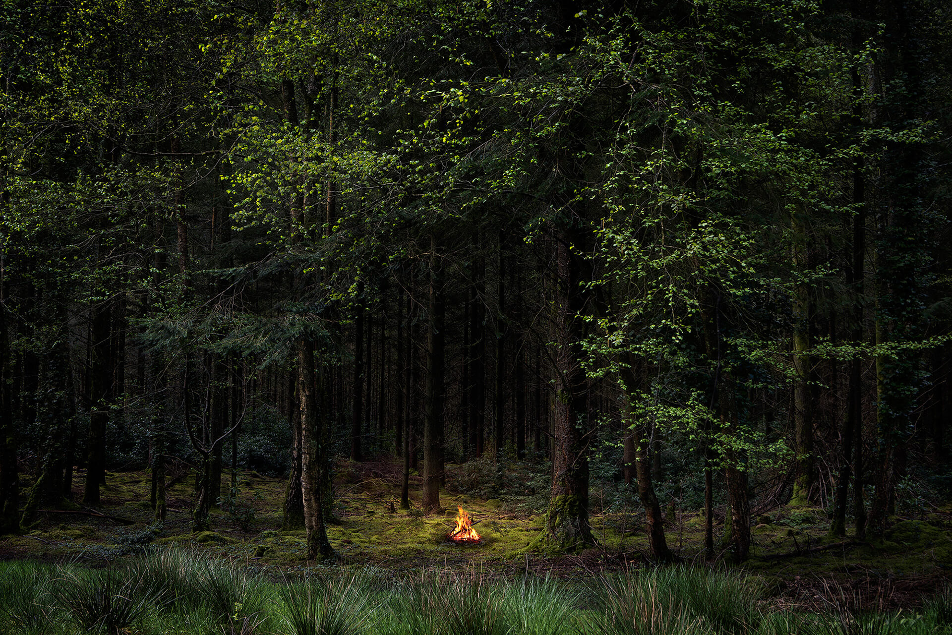 Fires | Ellie Davies| STIRworld