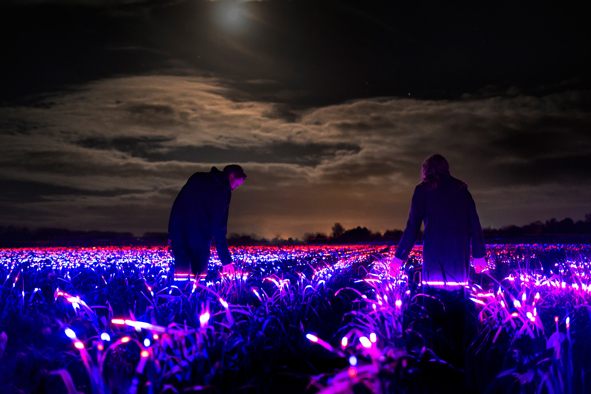 Grow, a light installation by Daan Roosegaarde | Grow by Daan Roosegaarde | STIRworld