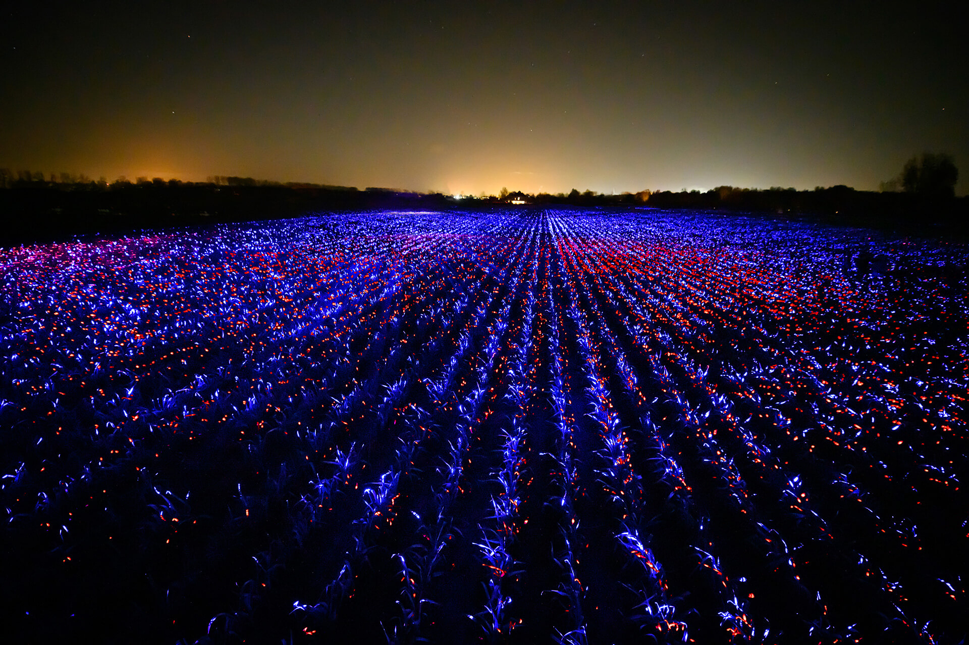 Red and blue ultraviolet lights dance across a 20,000 sqm Dutch farmland | Grow by Daan Roosegaarde | STIRworld