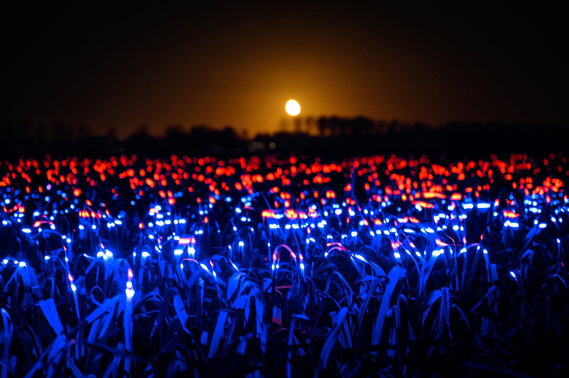Grow also reveals itself as a hopeful and poetic luminous spectacle | Grow by Daan Roosegaarde | STIRworld