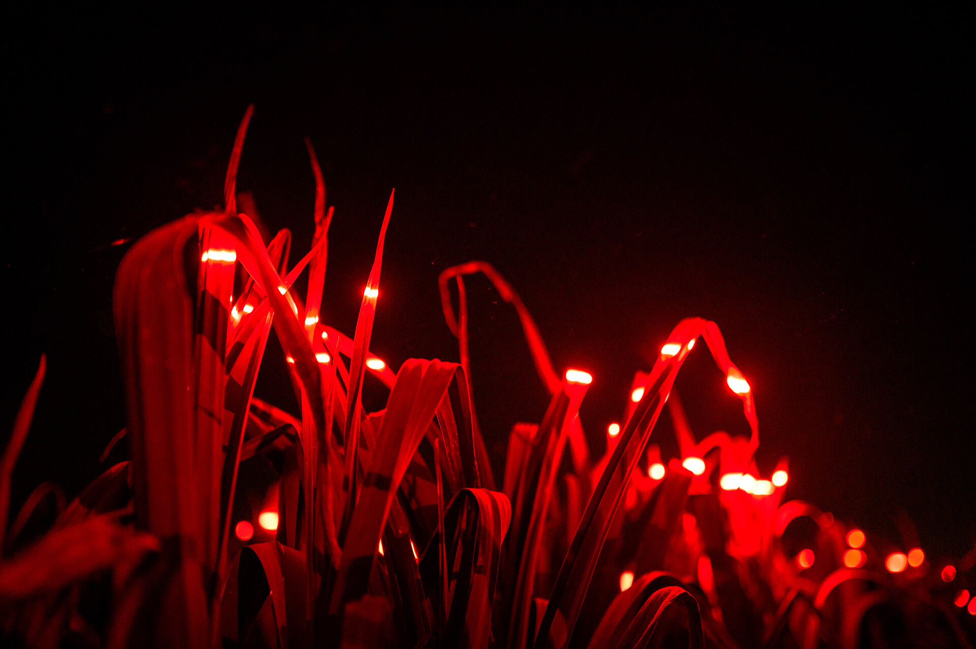 The field illuminated at night | Grow by Daan Roosegaarde | STIRworld