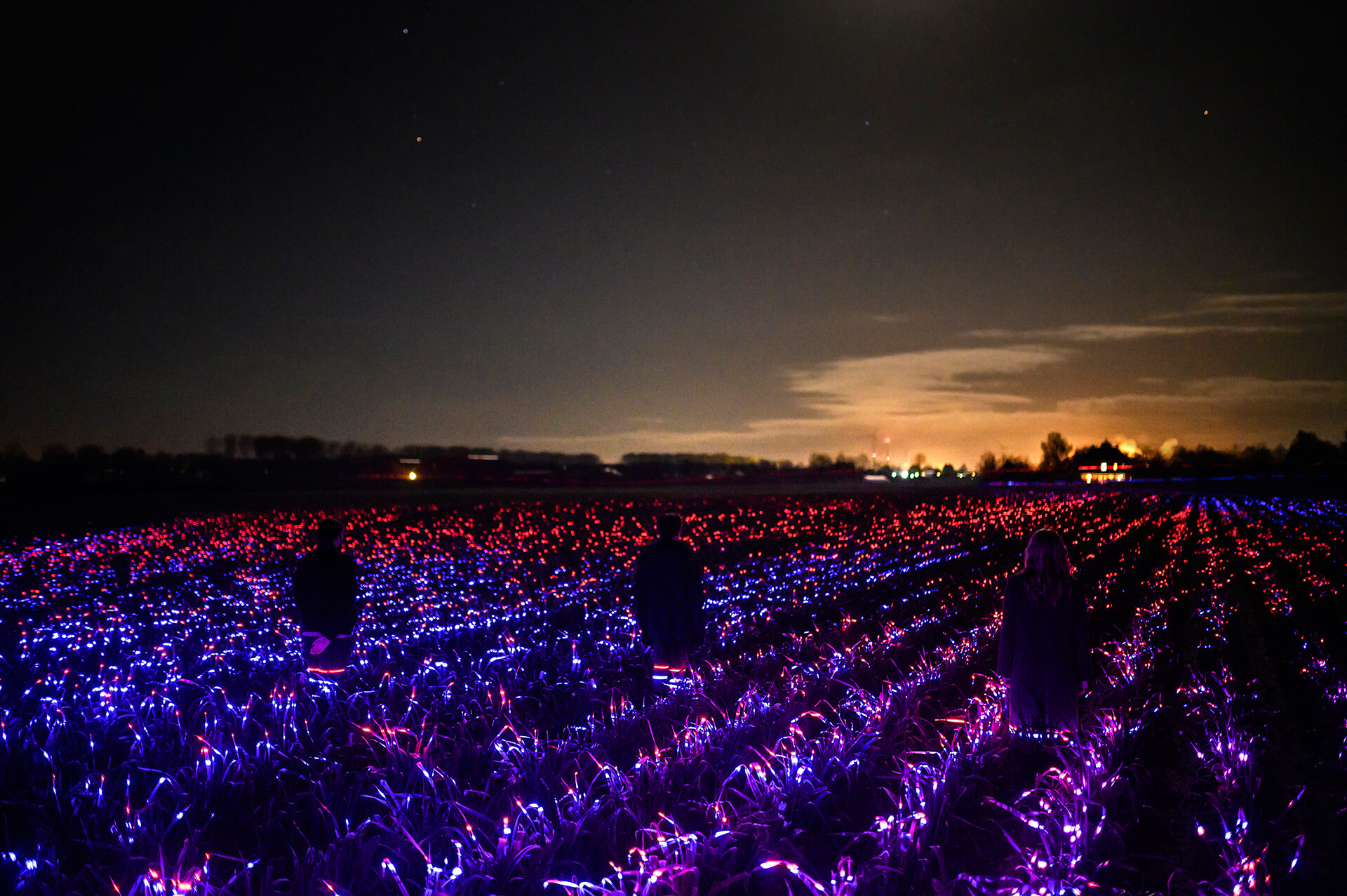 The lights enhance the growth of crops and makes them more resilient | Grow by Daan Roosegaarde | STIRworld