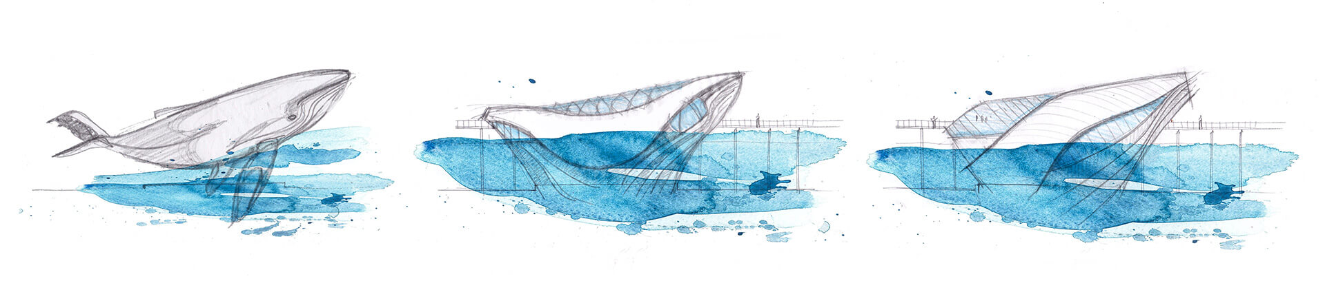 Conceptual sketch of the Australian Underwater Discovery Centre | Australian Underwater Discovery Centre by Baca Architects | STIRworld