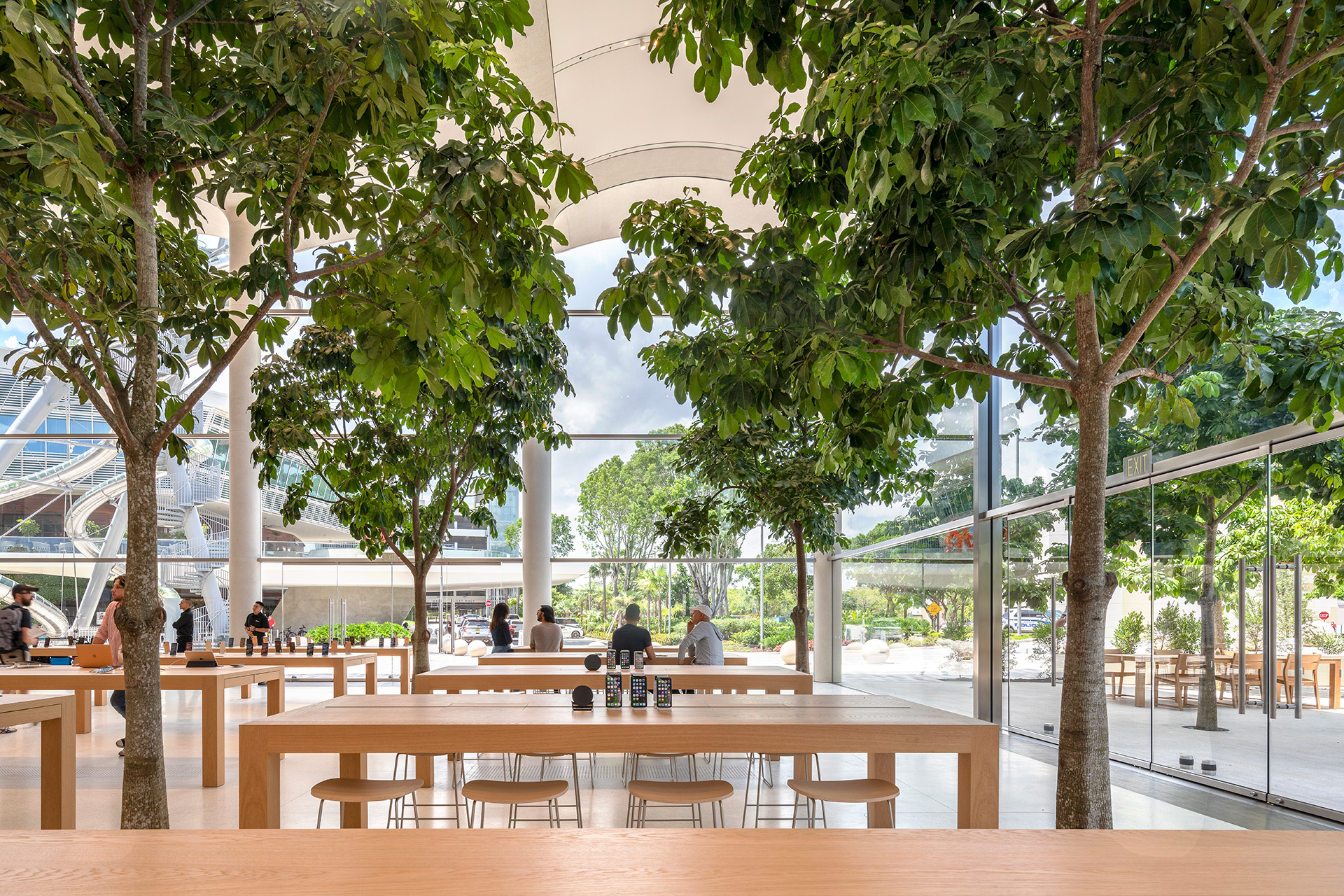 Inside Apple Aventura, with teak furniture and trees | Apple Aventura | Foster + Partners | STIR